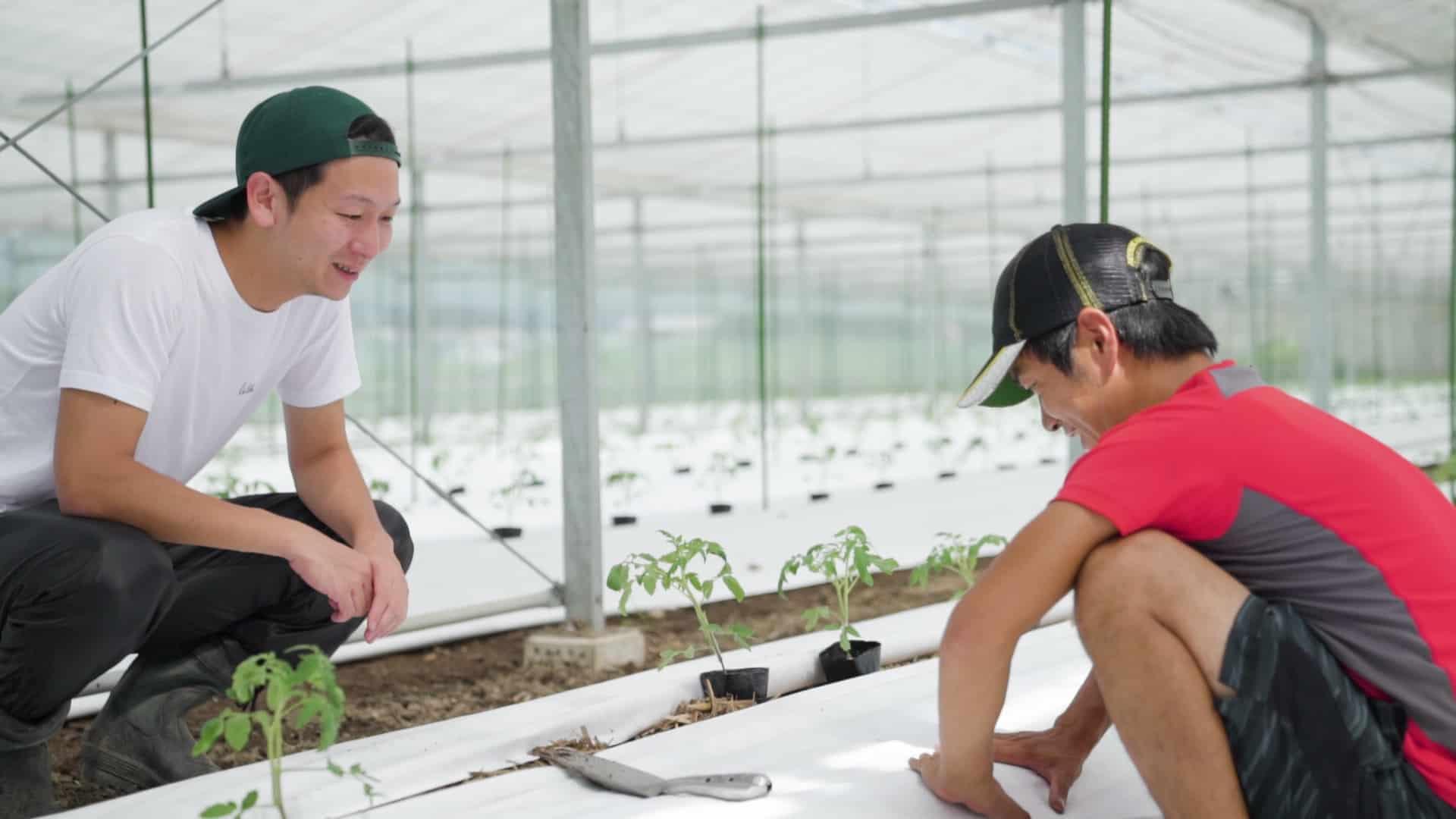 実際にトマト農家を訪れて、苗木を植える体験をしている写真