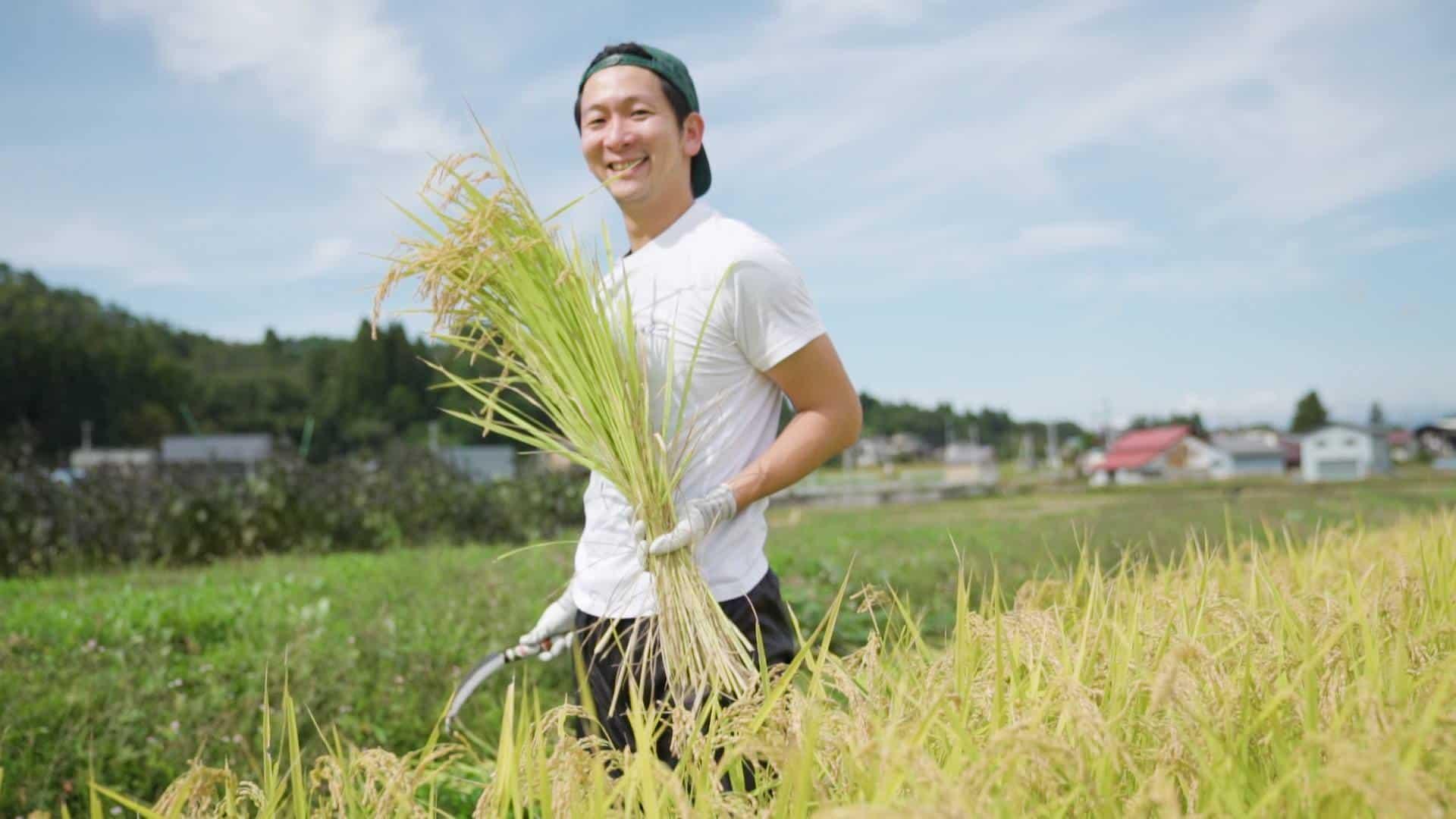 米沢の米農家で稲刈りの様子/この他にもレタス農場、トマト農家、ズッキーニ農場、レンコン農業、田植え体験など、継続的に農家を訪れ、WithGreenで取り扱う食材を選んでいる。